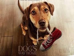 A Dog's Way Home english subtitles srt downoad